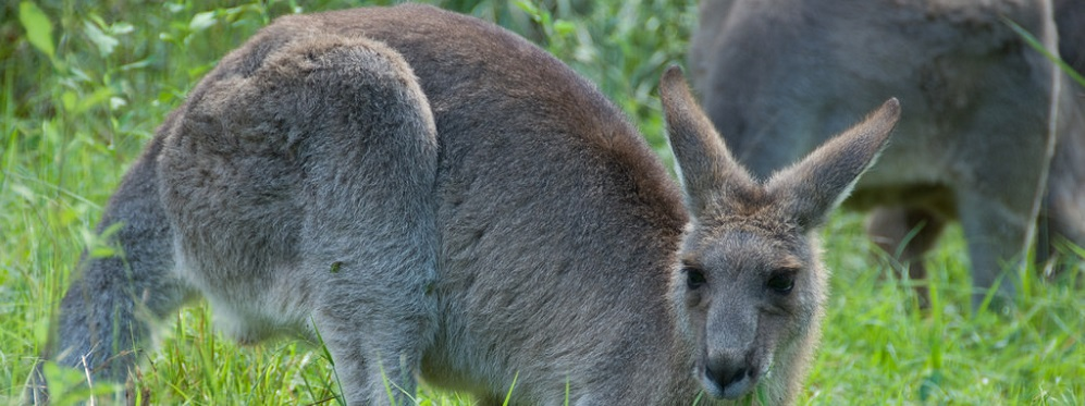 The Wildlife of the Blue Mountains