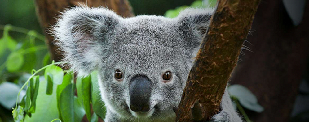 The Eclectic Wildlife of the Blue Mountains